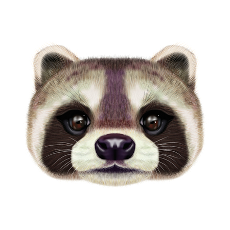 Illustrated face of Raccoon
