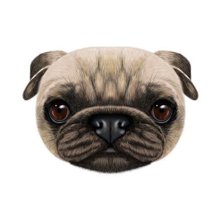 Illustrated face of Pug Dog. Cute head of domestic dog for print on pillow. Banco de Imagens
