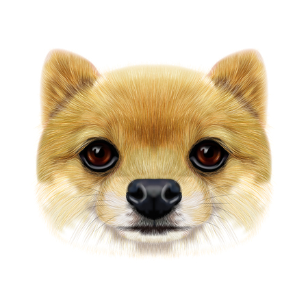 Geïllustreerde gezicht van Pomeranian Spitz Dog. Stockfoto