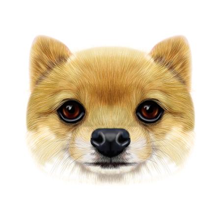 Illustrated face of Pomeranian Spitz Dog.