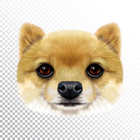 Vector Illustrated face of Pomeranian Spitz Dog. Cute head of a creamy domestic dog for print on pillow.