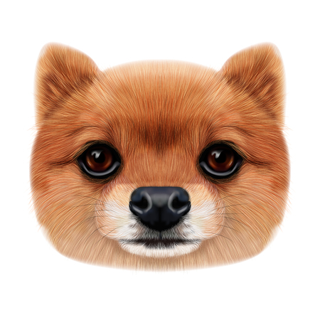 Illustrated face of Pomeranian Spitz Dog. Banco de Imagens - 94358087
