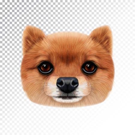 Vector Illustrated face of Pomeranian Spitz Dog. Vettoriali