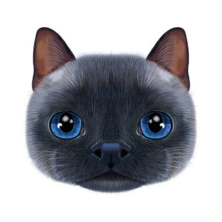 Illustration portrait of Thai cat. Imagens - 93933136