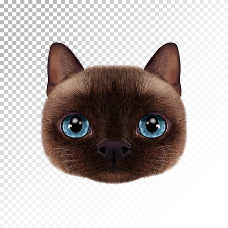 Vector illustration portrait of Thai cat. Cute realistic cartoon face of seal-point cat. Иллюстрация