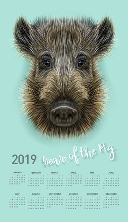 Pig calendar for 2019. Vector editable template with concept. Symbol of the year in the Chinese calendar. Realistic vector illustration of wild boar.