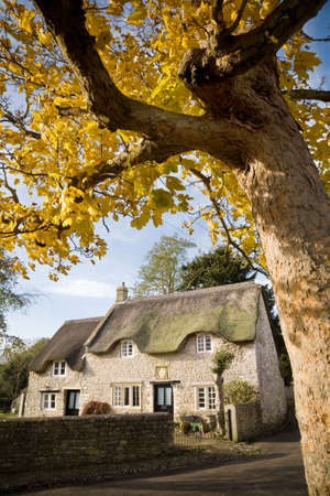 thatched cottage: old thatched cottage in an English country village with yellow leaved tree in foreground