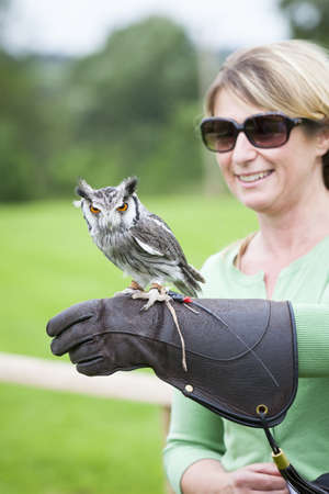 faced: Woman with a Southern White-faced Owl perched on her glove on a falconry experience day  Stock Photo