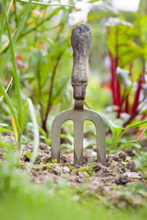 A gardener s fork in a vegetable patch Stock Photo - 17981658