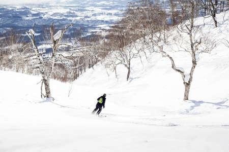 offpiste: Woman skis off-piste through birch trees in Niseko, Japan