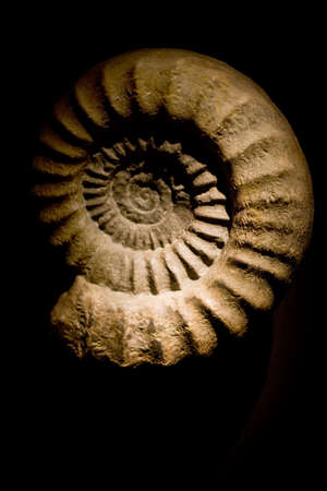 Close-up of an ammonite fossil against a black background. Shallow, selective focus on the right hand side of sample. Stock Photo - 18633550