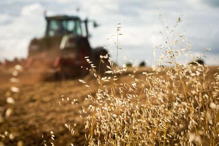 arando: Primer plano de la cosecha con el campo Tractor arando en el fondo