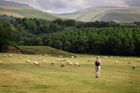 Lone walker in Cumbrian Countryside with High Cup Nick in background, England, UK. Stock Photo