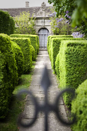 garden gate: Hedge lined pathway leading to a gate within formal gardens. Selective focus on the gate, out of focus ironwork in the foreground.