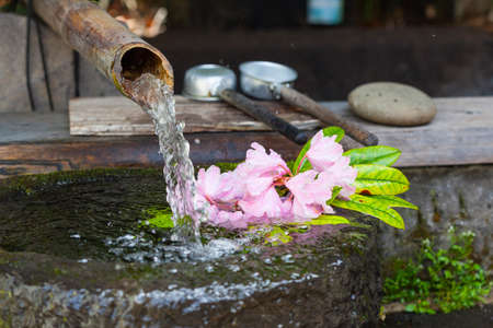Japanese water basin, called a tsukubai, fed by a bamboo water pipe, or kakei  Pink rhododendron flowers float in the water