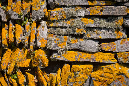 dry stone: Close-up of a dry stone wall covered in orange lichen