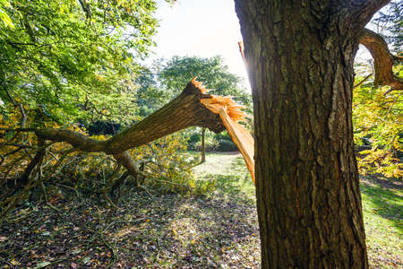 limb: BATH, UK - OCTOBER 29  Large tree limb broken off during the  St Jude  storm that travelled across Europe in late October 2013  Wind speeds around 70mph hit southern parts of the UK  Stock Photo