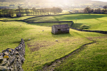 wensleydale: A field with sheep, dry stone wall and a traditional stone barn nears Hawes in Wensleydale, England