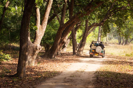 madhya pradesh: TALA, INDIA - JANUARY 09, 2015 : A safari jeep on a trail through forest in Bandhavgarh National Park in Madhya Pradesh. The park is a popular tourist destination with opportunities to spot tigers. Editorial