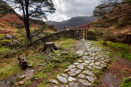 A cobbled, stone walkway in a wooded area of the Lake District near Elterwater, England. Stock Photo