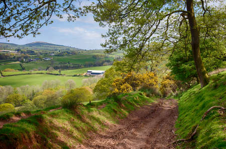 brecon beacons: A Wooded Track on the BEacons Way Through Beautiful Countryside in Carmarthenshire, Wales, UK