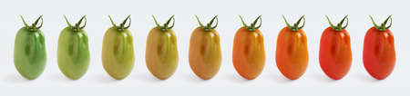 A plum tomato ripening, demonstrated with 9 images in a row