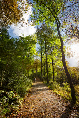lake district: Woman Walking on Autumnal Woodland Path Near Elterwater in Cumbria, UK Stock Photo