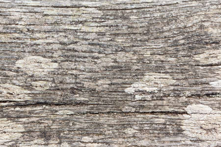 Close up of an old, sun bleached wooden plank with patches of lichen