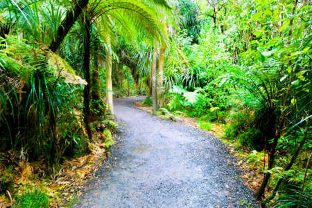 Lush, green native rainforest scene photo