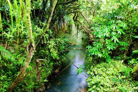 Lush, green native rainforest scene photo