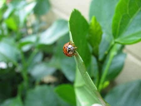 ladybug looking Zdjęcie Seryjne