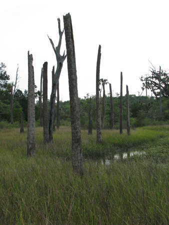 swap: old trees in swap land