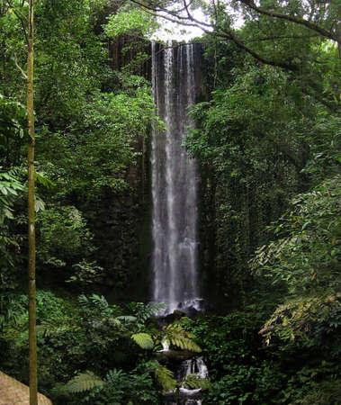 tropicana: Waterfall