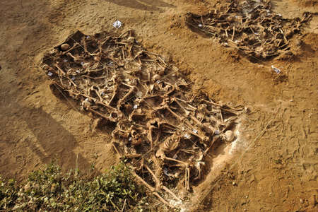 In 1936, just at the beginning of the Spanish Civil War, dozens of non-fascist Citizens Were Carried from Burgos to mount Estepar. Over there, They Were shot by a platoon of Francos army and buried in a mass grave Until 2014-2015.