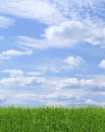 Green grass growing, with blue sky background photo