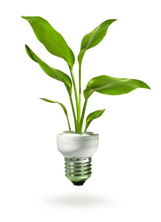 welfare plant: Green plant growing from energy saving compact fluorescent lamp
