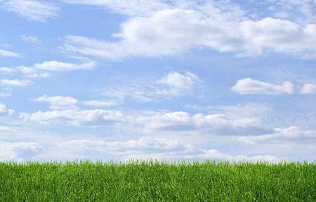 Green grass growing on blue summer sky background photo