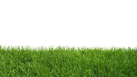 Green grass growing on white background isolated photo