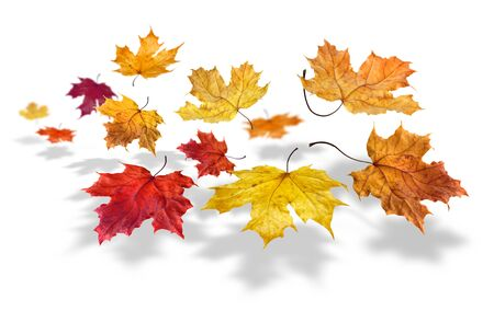 Colorful autumn maple leafs flying and falling on white background photo