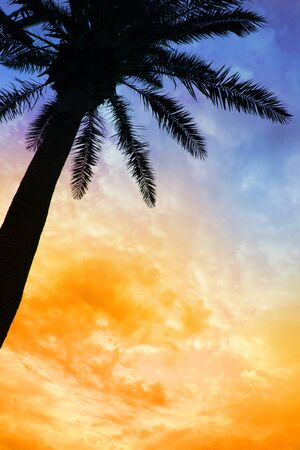 purple sunset: Palm tree silhouette against colorful sunset sky