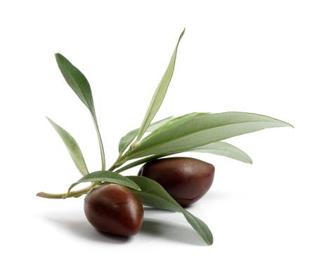 hoja de olivo: Rama verde olivo con aceitunas aislados en fondo blanco