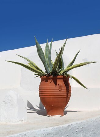 white washed: Mediterranean terracotta cactus pot on white washed plaster, blue sky background Stock Photo