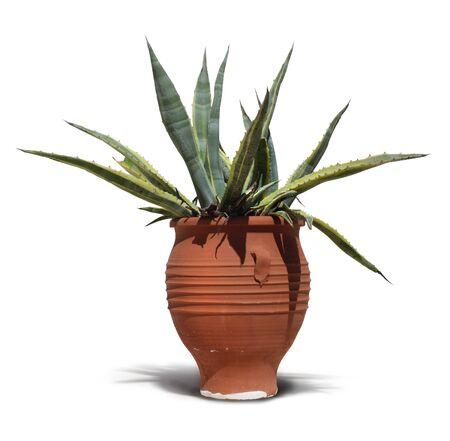 greek pot: Mediterraneo terracotta vaso di cactus su sfondo bianco isolato