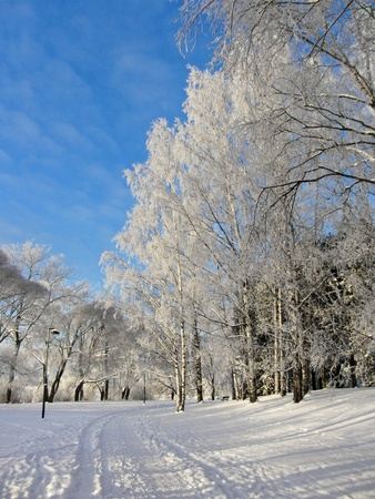 Frozen trees in snowy park winter background photo