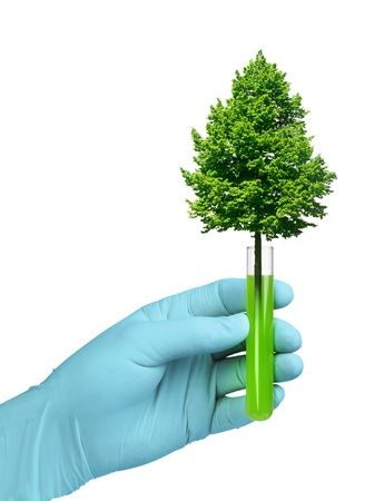 Biotechnology concept, tree growing in test glass tube