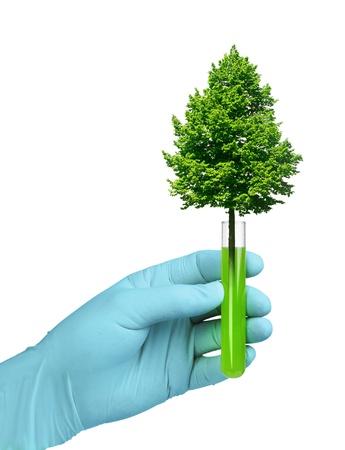 biotecnologia: Concepto de la biotecnolog�a, �rbol que crece en el tubo de ensayo de vidrio Foto de archivo