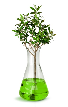Biotechnology concept, tree growing in test glass tube beaker photo