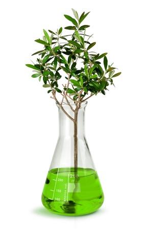 biotecnologia: Concepto de la biotecnología, árbol que crece en la prueba de vaso tubo de vidrio