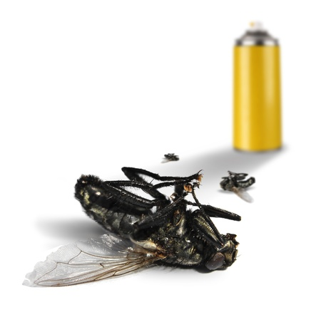 Insecticide spray bottle can and dead flies on white background photo