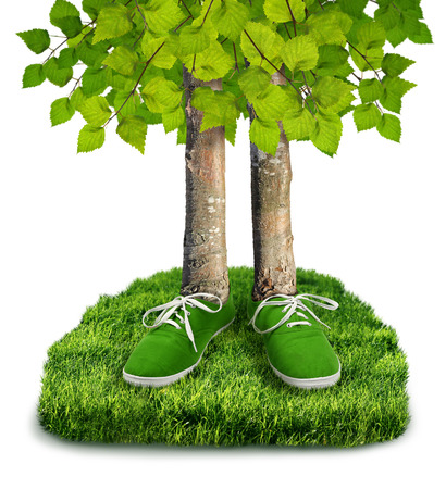 huella pie: Concepto de medio ambiente la huella de carbono verde, �rboles con zapatos aislados Foto de archivo